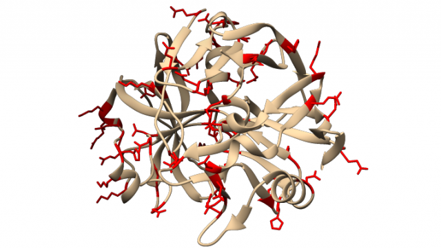 chymosin Chymosin crystal structure of bovine chymosin comp bovine chymosin is now produced recombinantly in e coli, aspergillus niger var awamori, and k lactis as alternative resource.